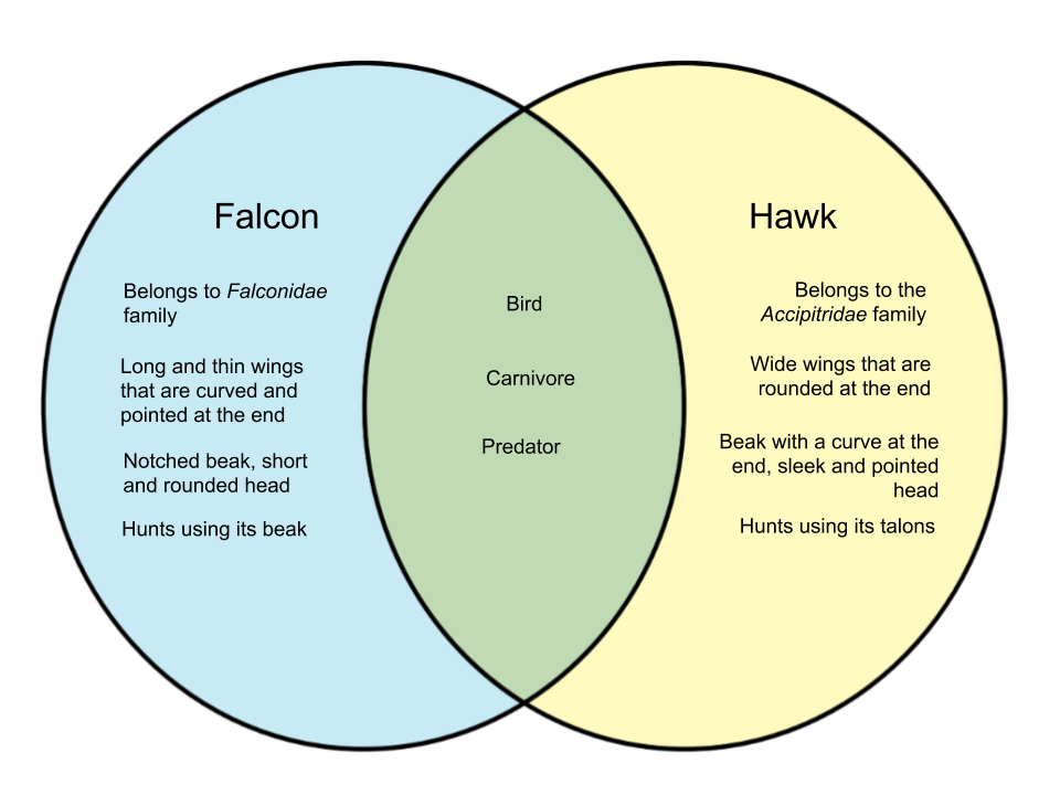 Difference-Between-Falcon-and-Hawk.png
