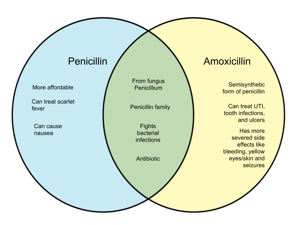 Difference-Between-Penicillin-and-Amoxicillin-1.png