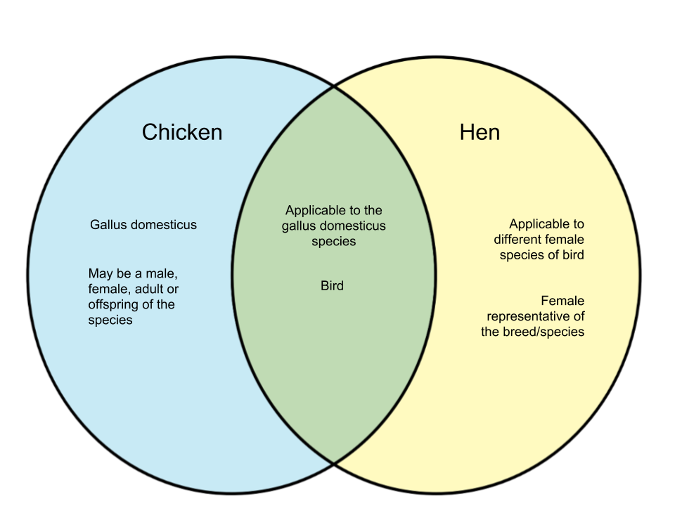 Difference-Between-Chicken-and-Hen.png