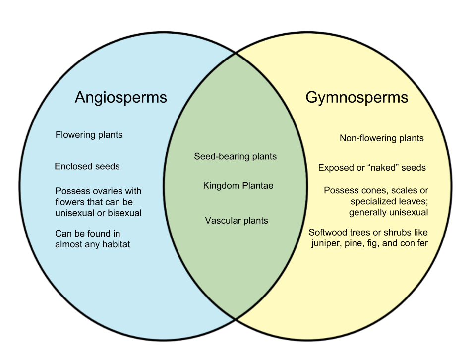 Difference Between Angiosperms And Gymnosperms