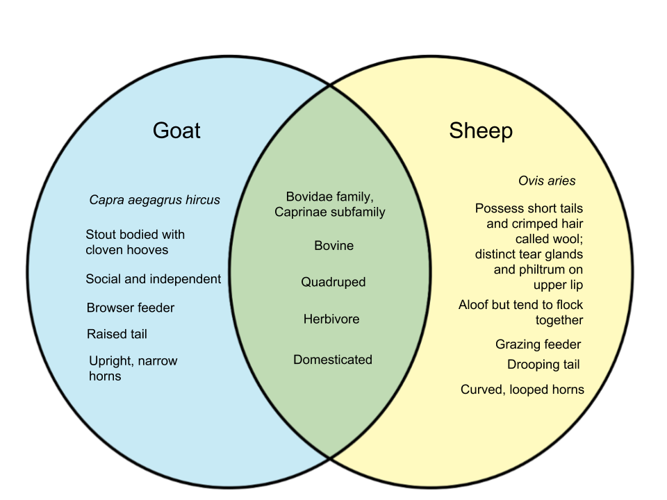 Difference-Between-Goat-and-Lamb.png