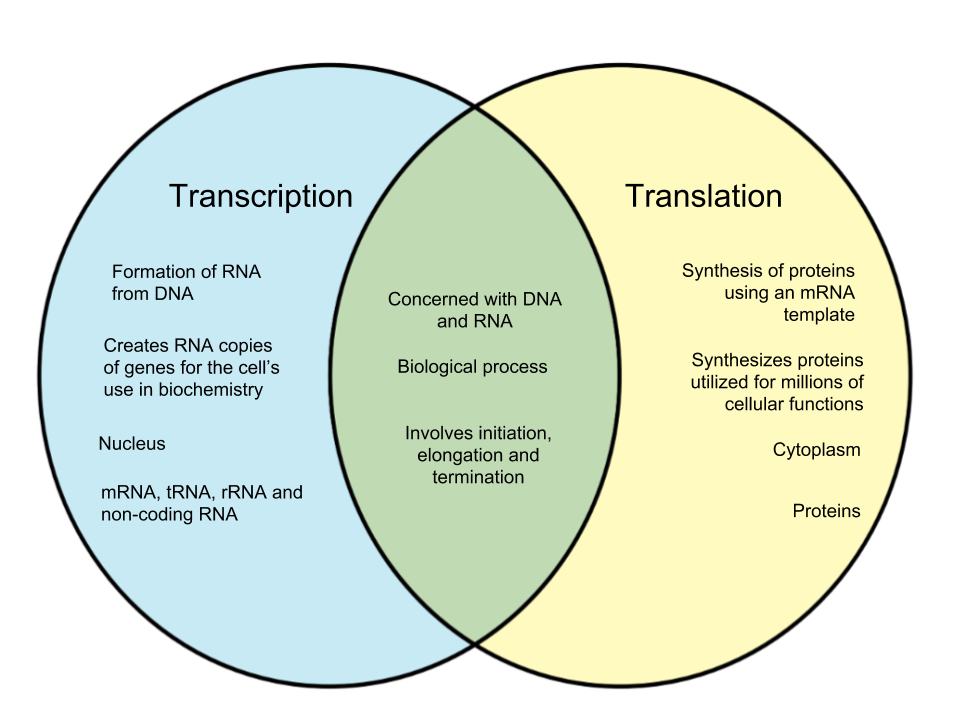Difference-Between-Transcription-and-Translation.png